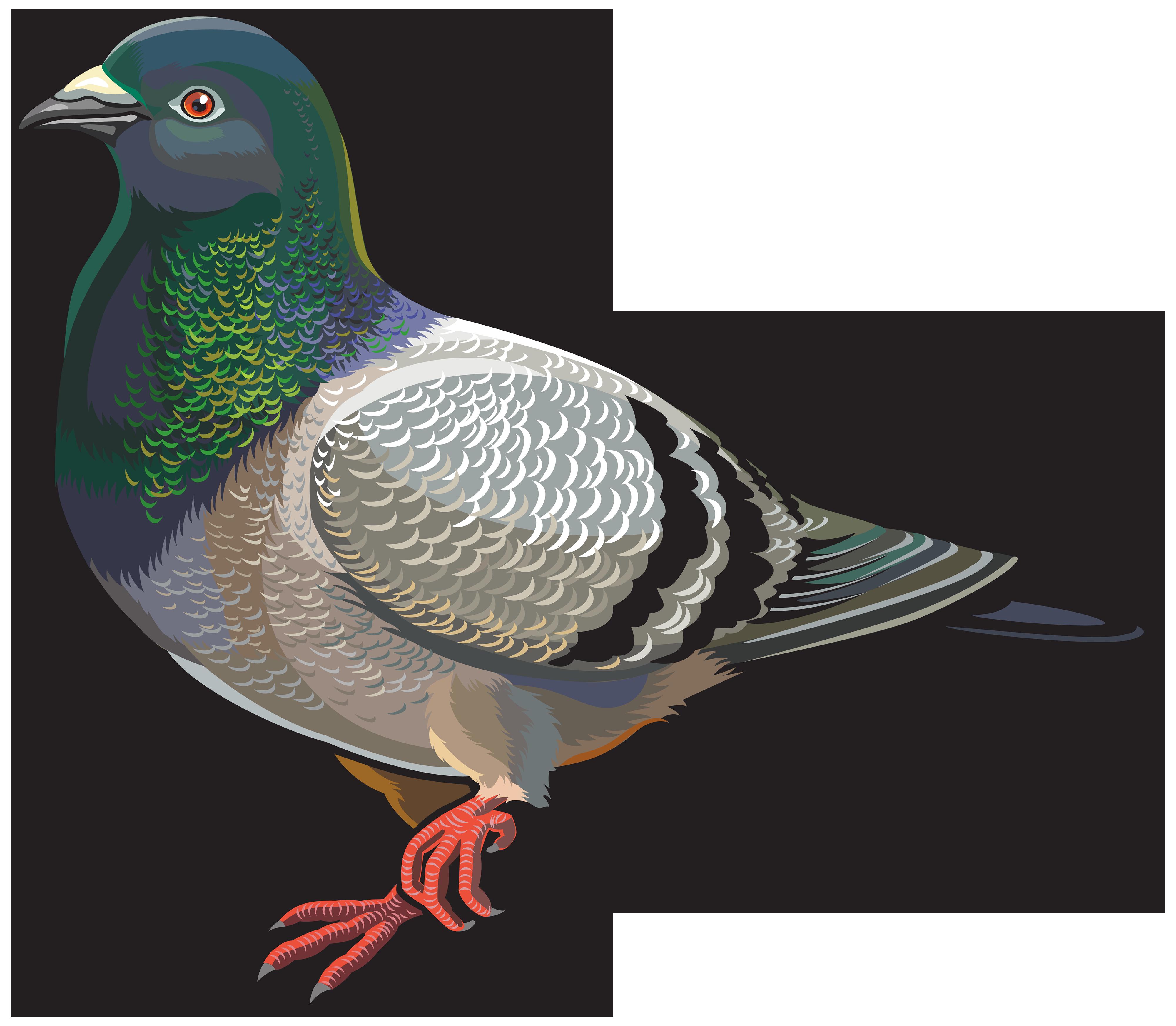 Pigeon clipart. Png best web