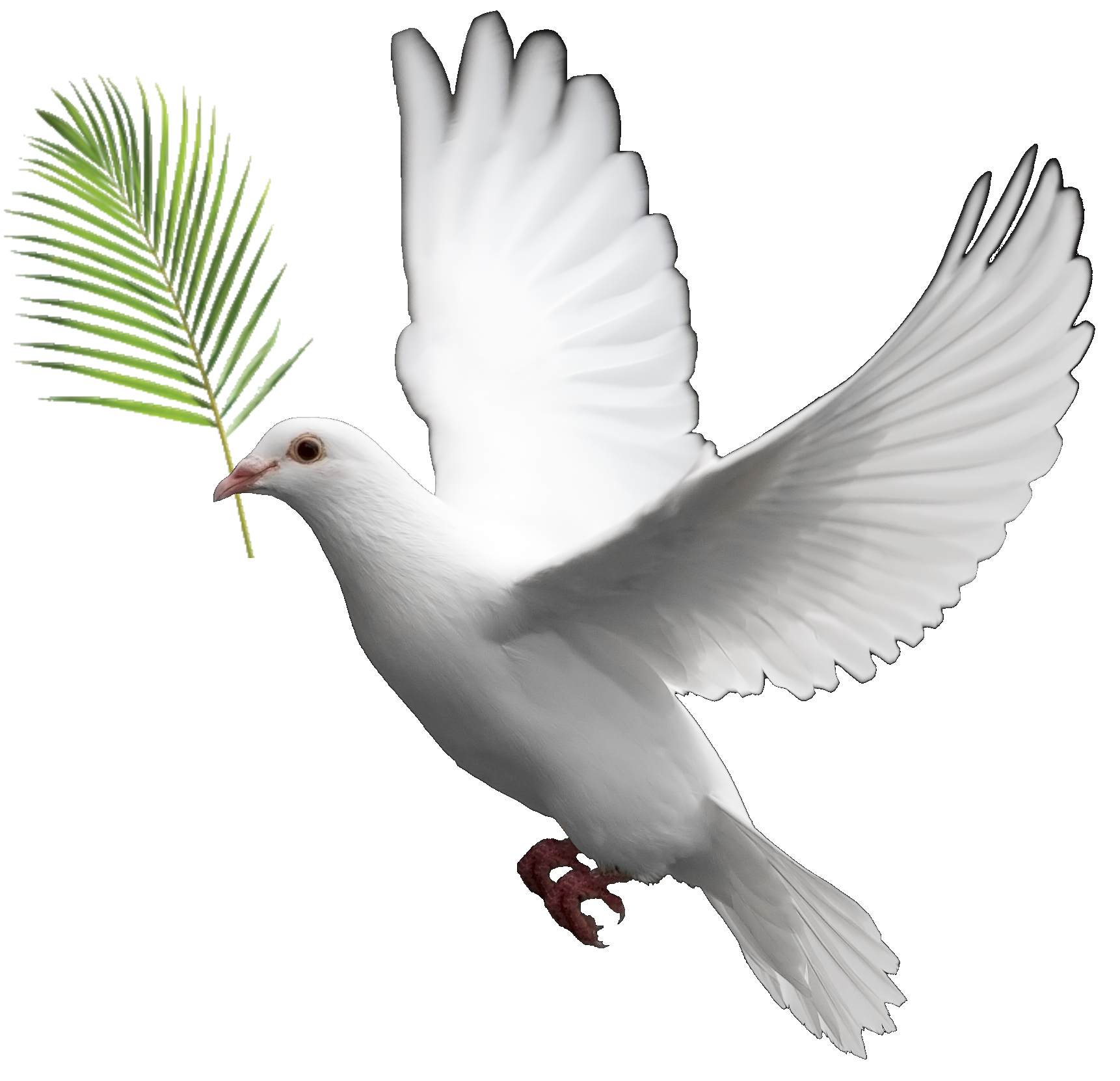 Occult symbols imagery and. Pigeon clipart bible