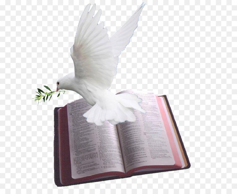 Bird feather transparent . Pigeon clipart bible