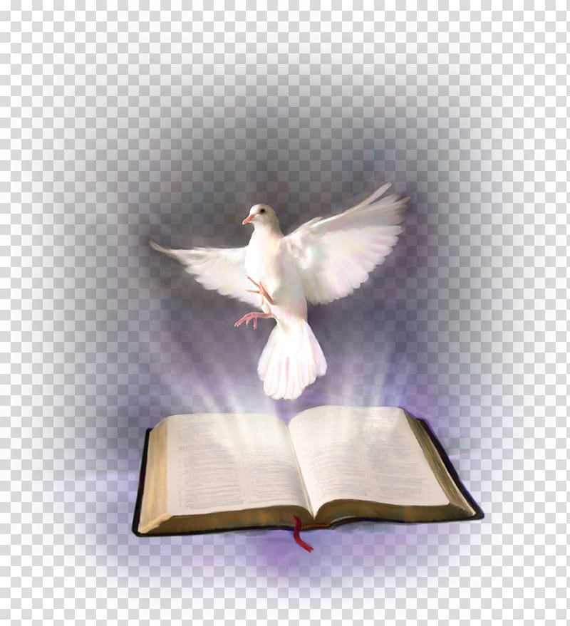 Pigeon clipart bible. White and opened book