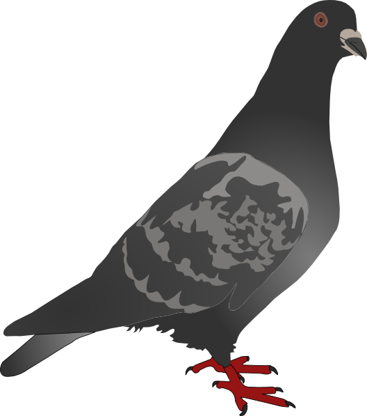 Clip art at clker. Pigeon clipart black and white