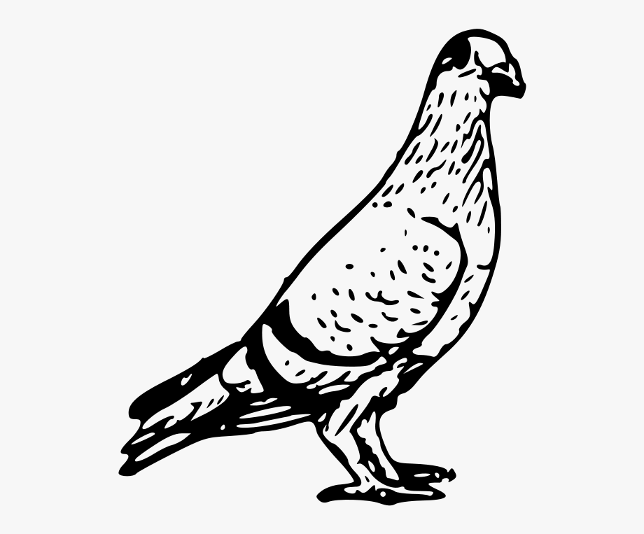 Logo free cliparts on. Pigeon clipart black and white