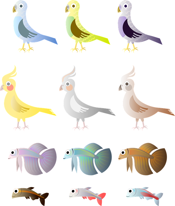 Budgie cliparts shop of. Pigeon clipart burung