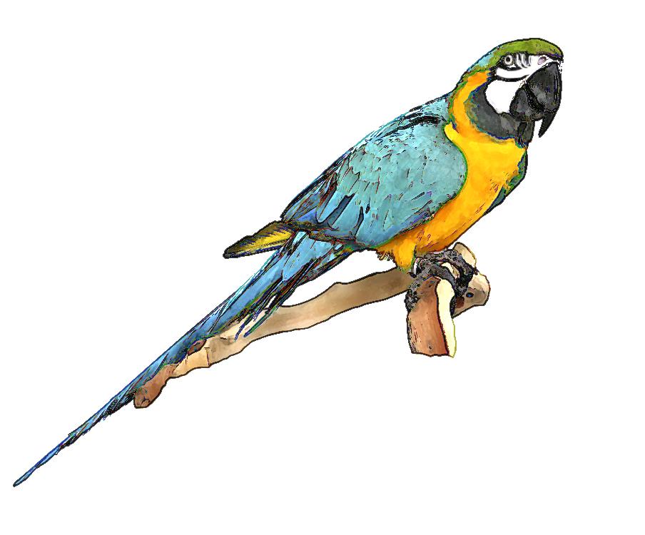 Pigeon clipart burung. Free birds flying download