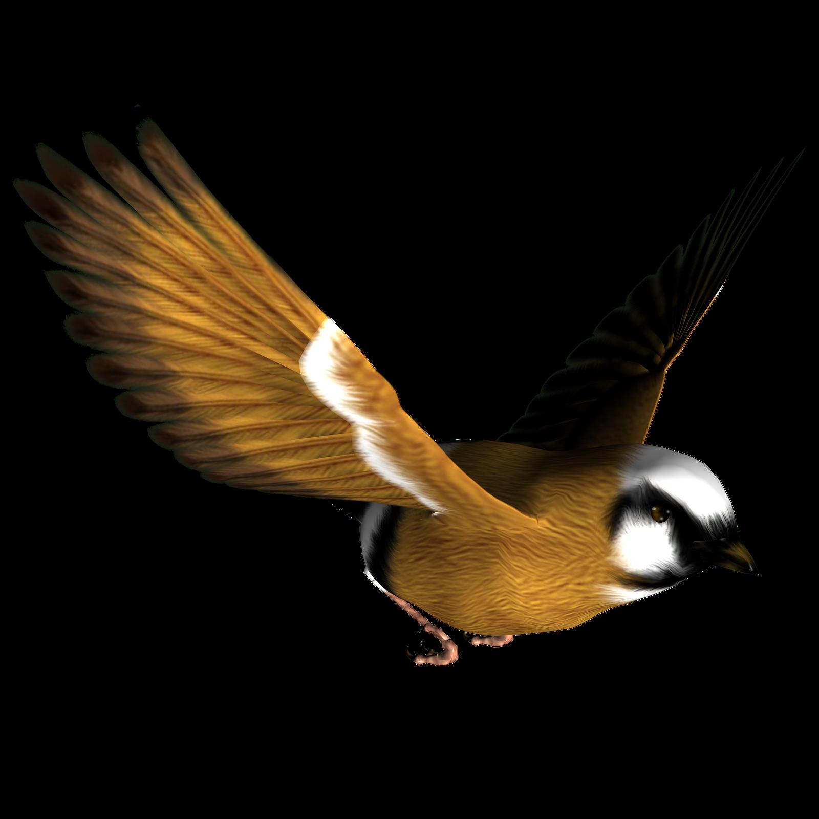 Pigeon clipart burung. Birds transparent png pictures