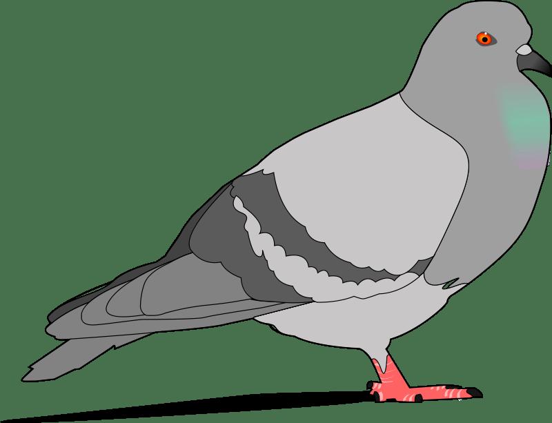 Pigeon clipart carrier pigeon. Images clip art djiwallpaper