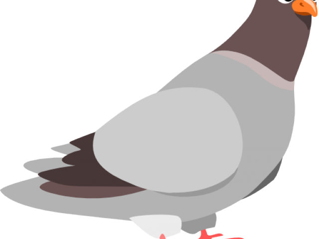 Transparent . Pigeon clipart face