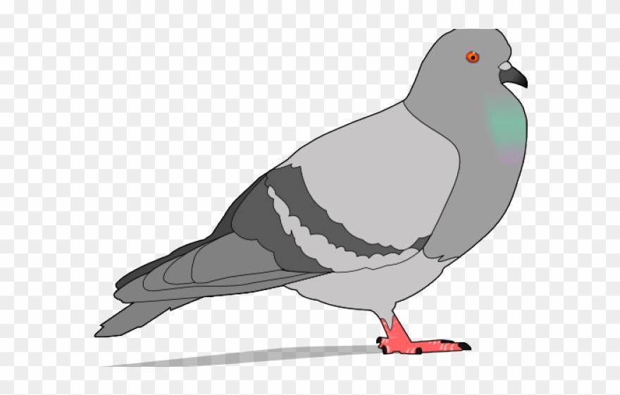 Pigeon clipart face. Pidgeons png download