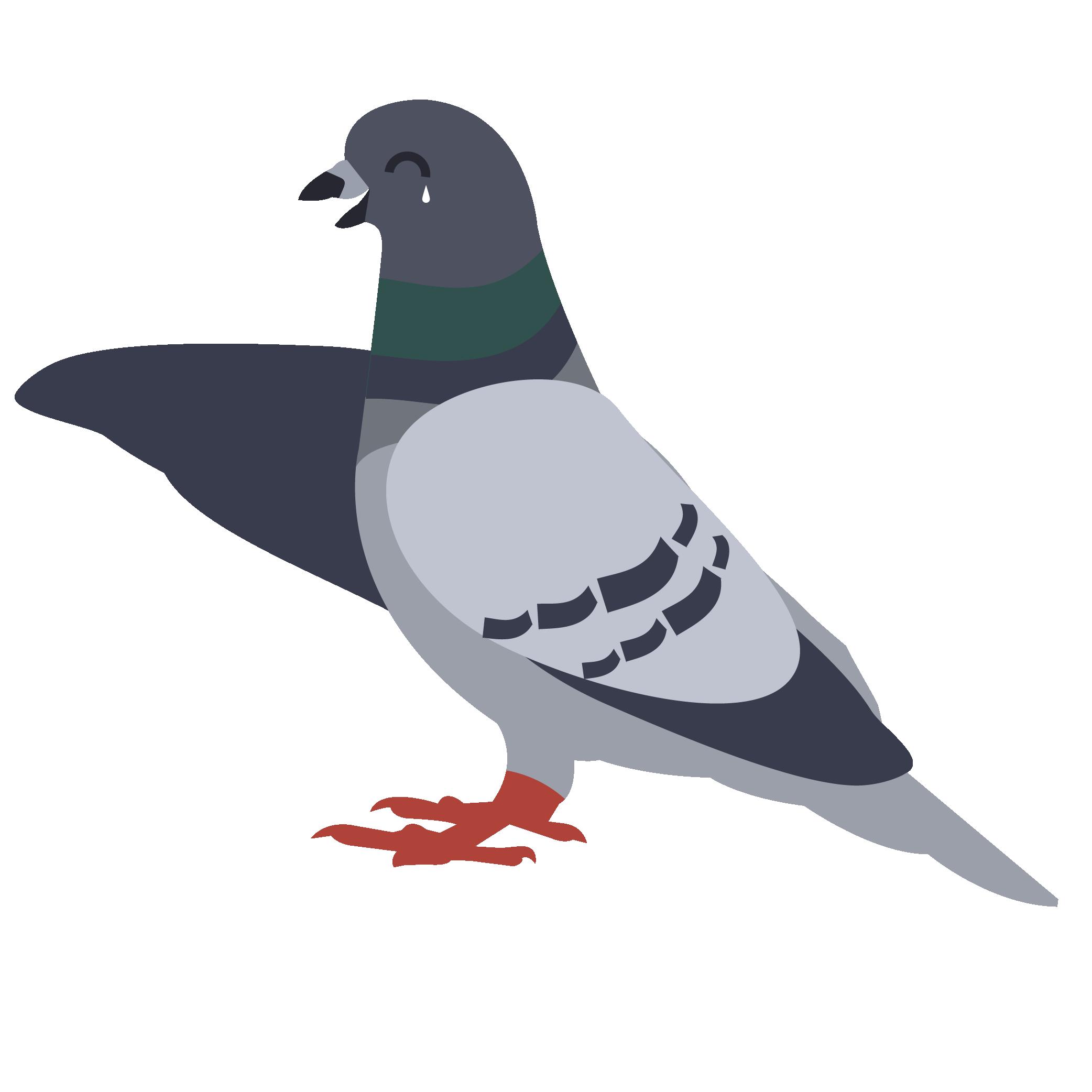 Pigeon clipart pigeon house. Fails premier control