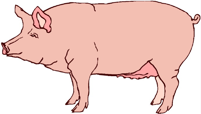 Pigs clipart swine. Free dirty pig cliparts
