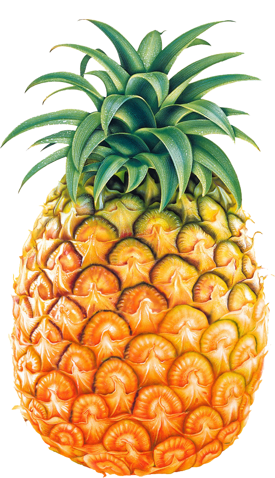 Png tumblr google search. Pineapple clipart eye
