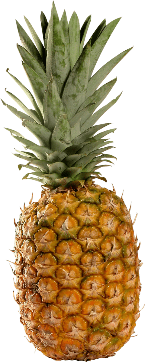Pineapple clipart file. Png free images toppng