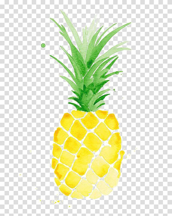 Watercolor painting drawing . Pineapple clipart oil paint