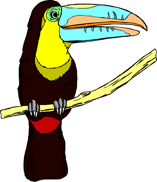 Forgetmenot birds hornbill rhinoceros. Pineapple clipart toucan