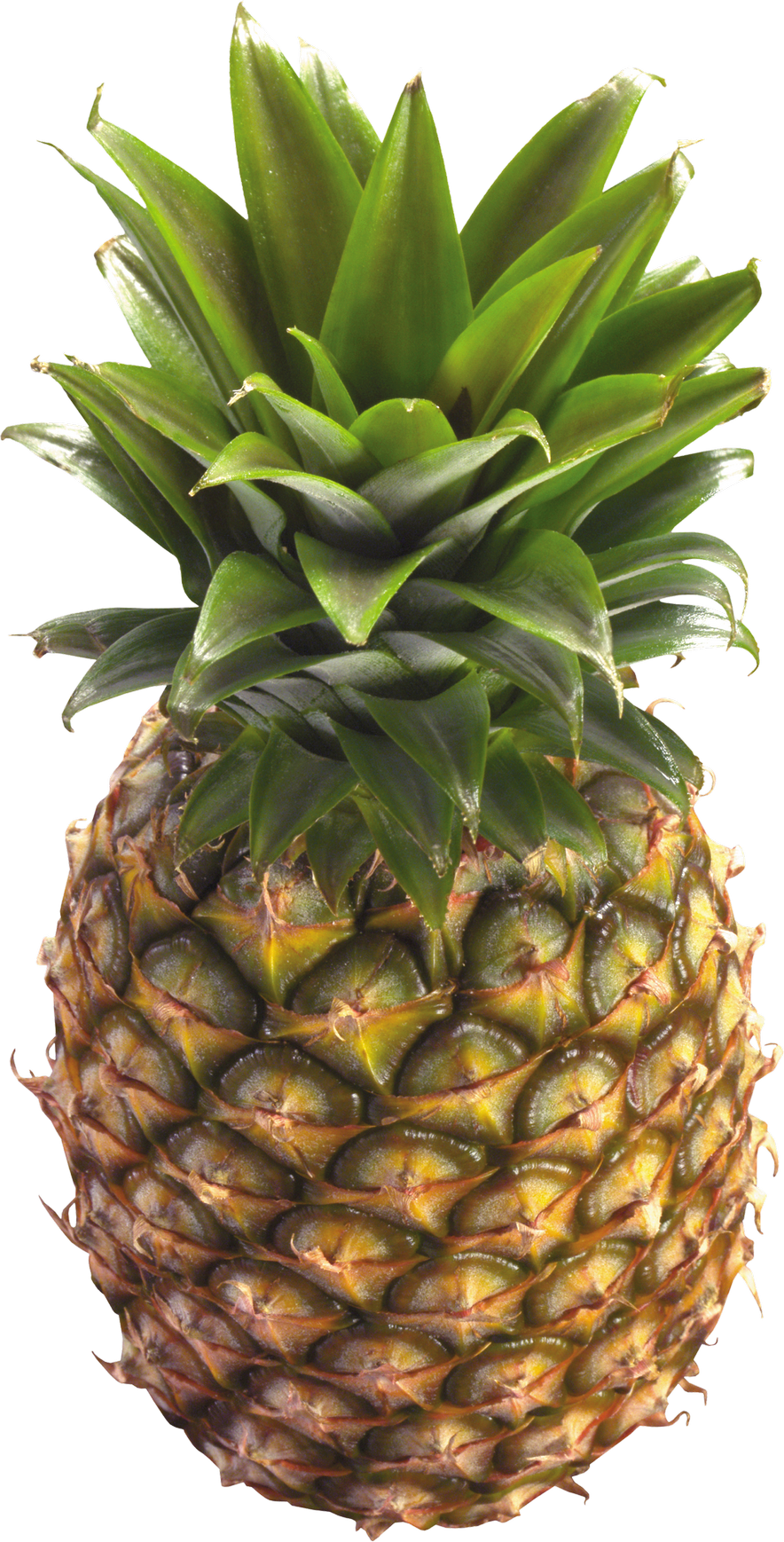 Pineapple clipart transparent. Png image purepng free