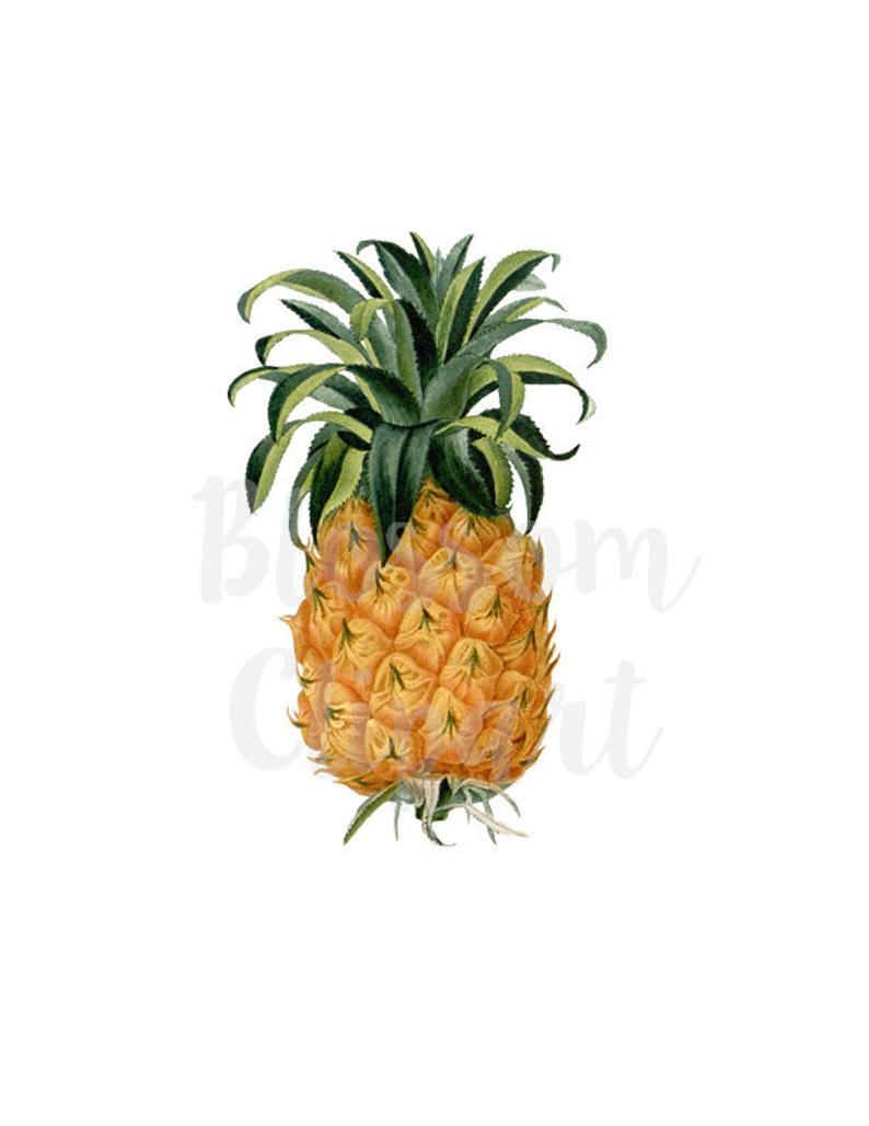 Pineapple clipart vintage. Clip art for prints