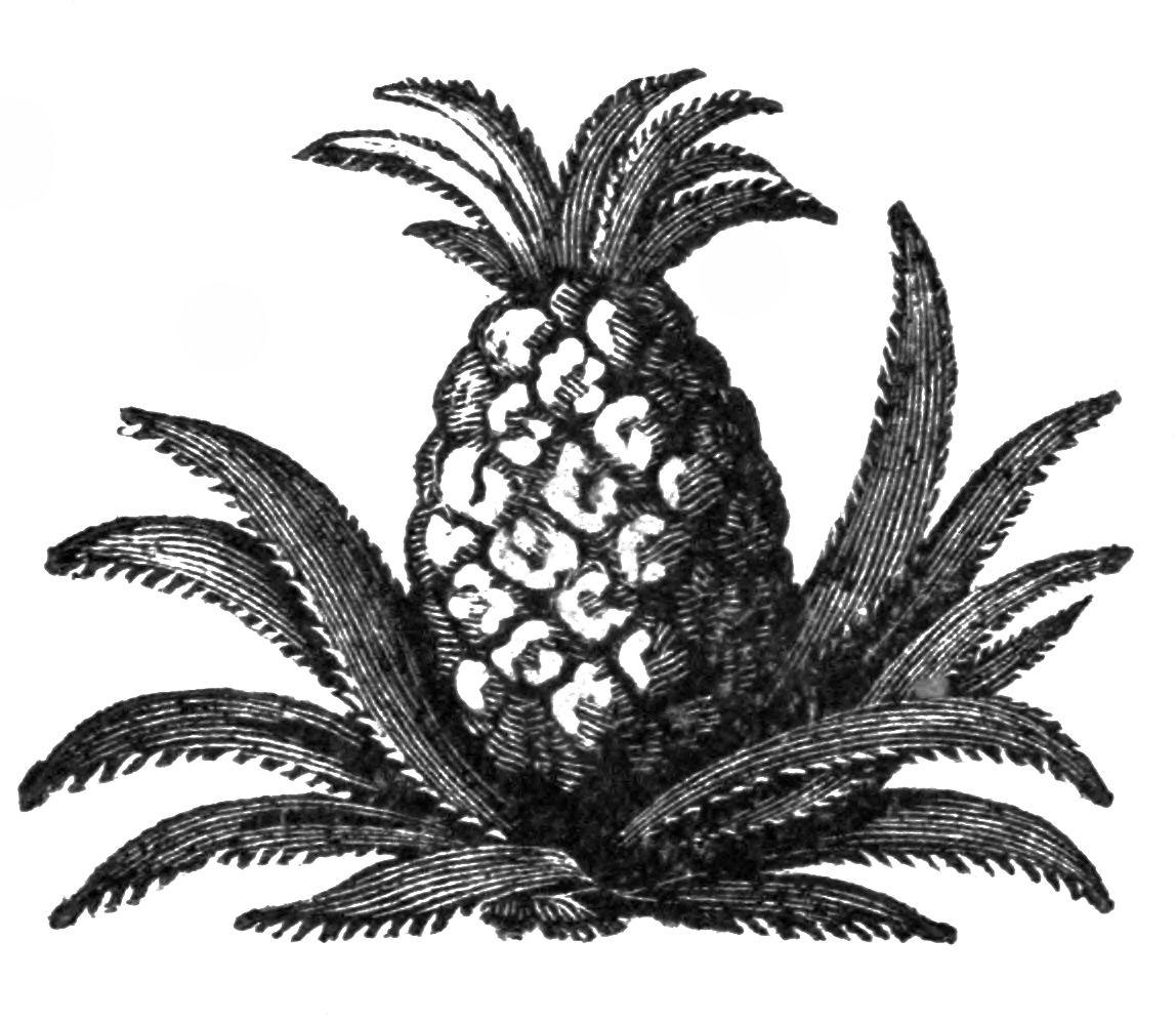 Clip art illustration artworks. Pineapple clipart vintage