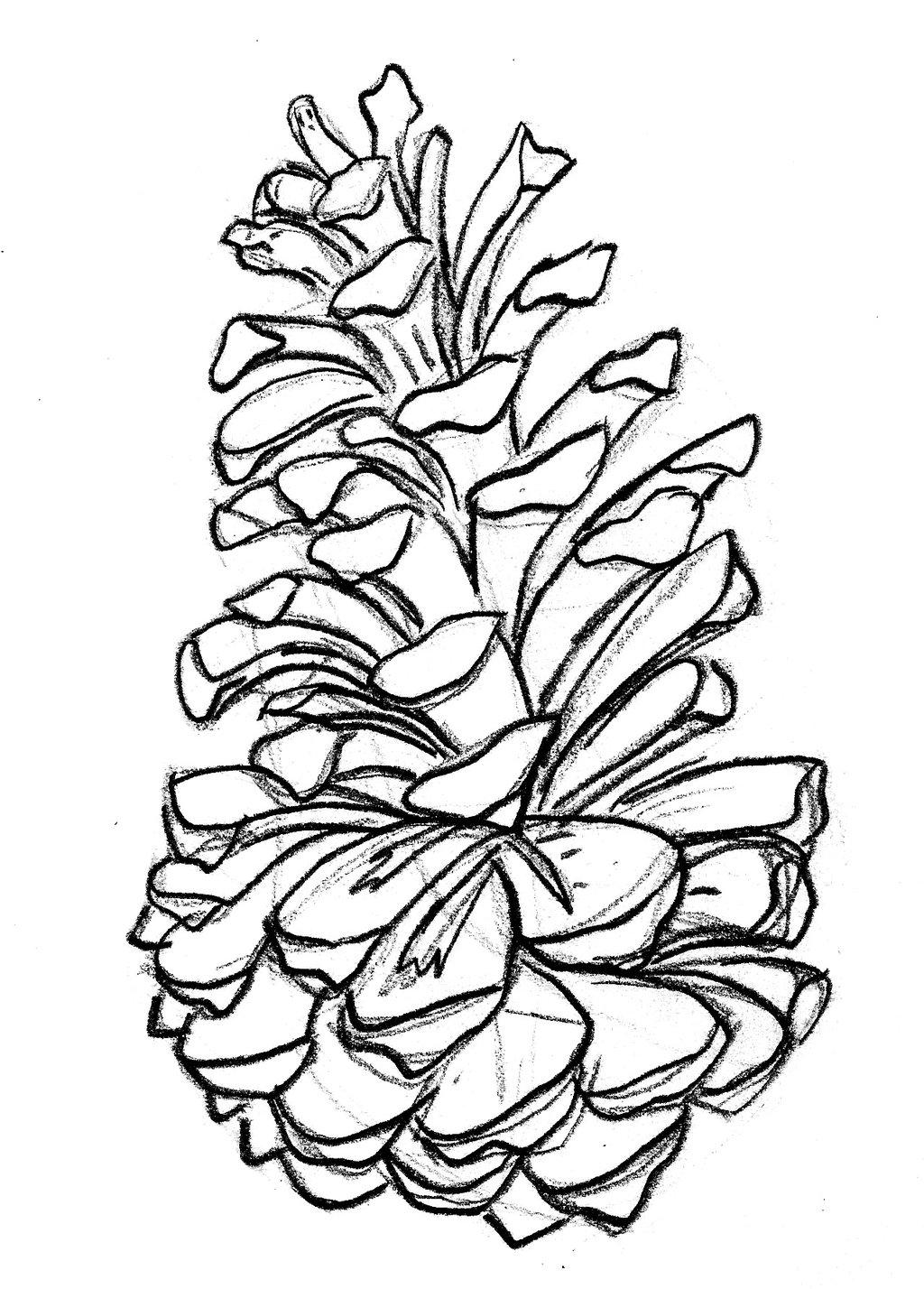 Clip art pine cone. Pinecone clipart