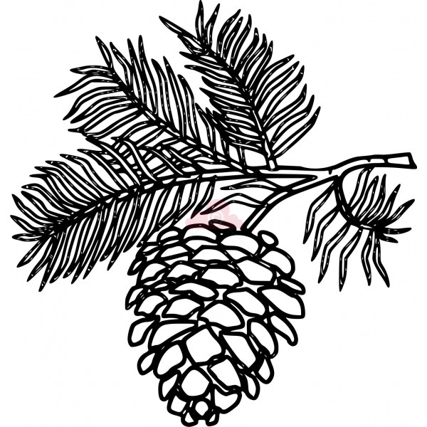 Pinecone clipart. White pine cone drawing