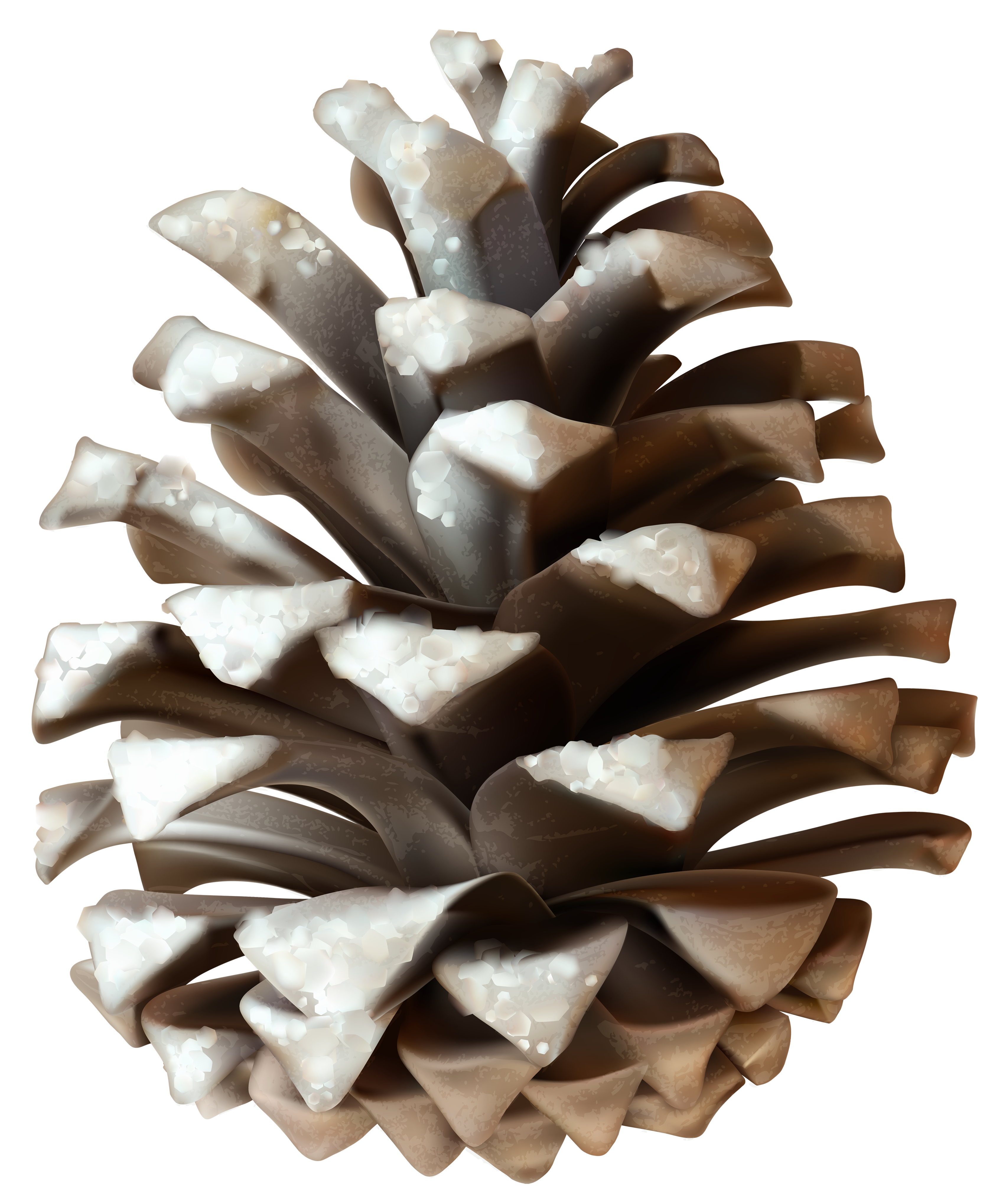 Pinecone clipart. Winter png clip art