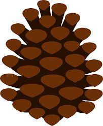 Pine cones cone and. Pinecone clipart