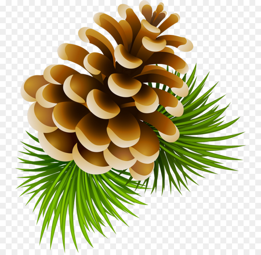 Christmas tree pine transparent. Pinecone clipart clip art