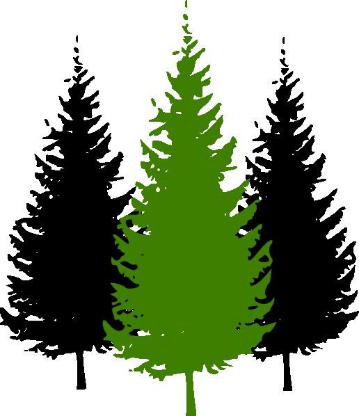 Pinecone clipart eastern white pine. Cartoon tree group pinetrees