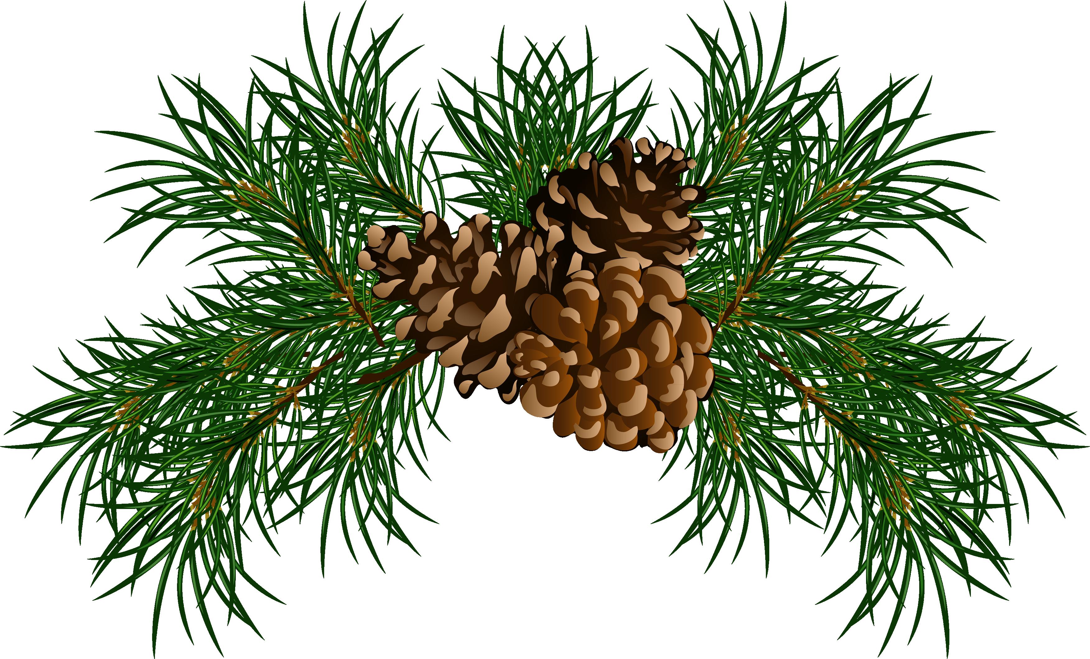 Conifer cone stone clip. Pinecone clipart eastern white pine