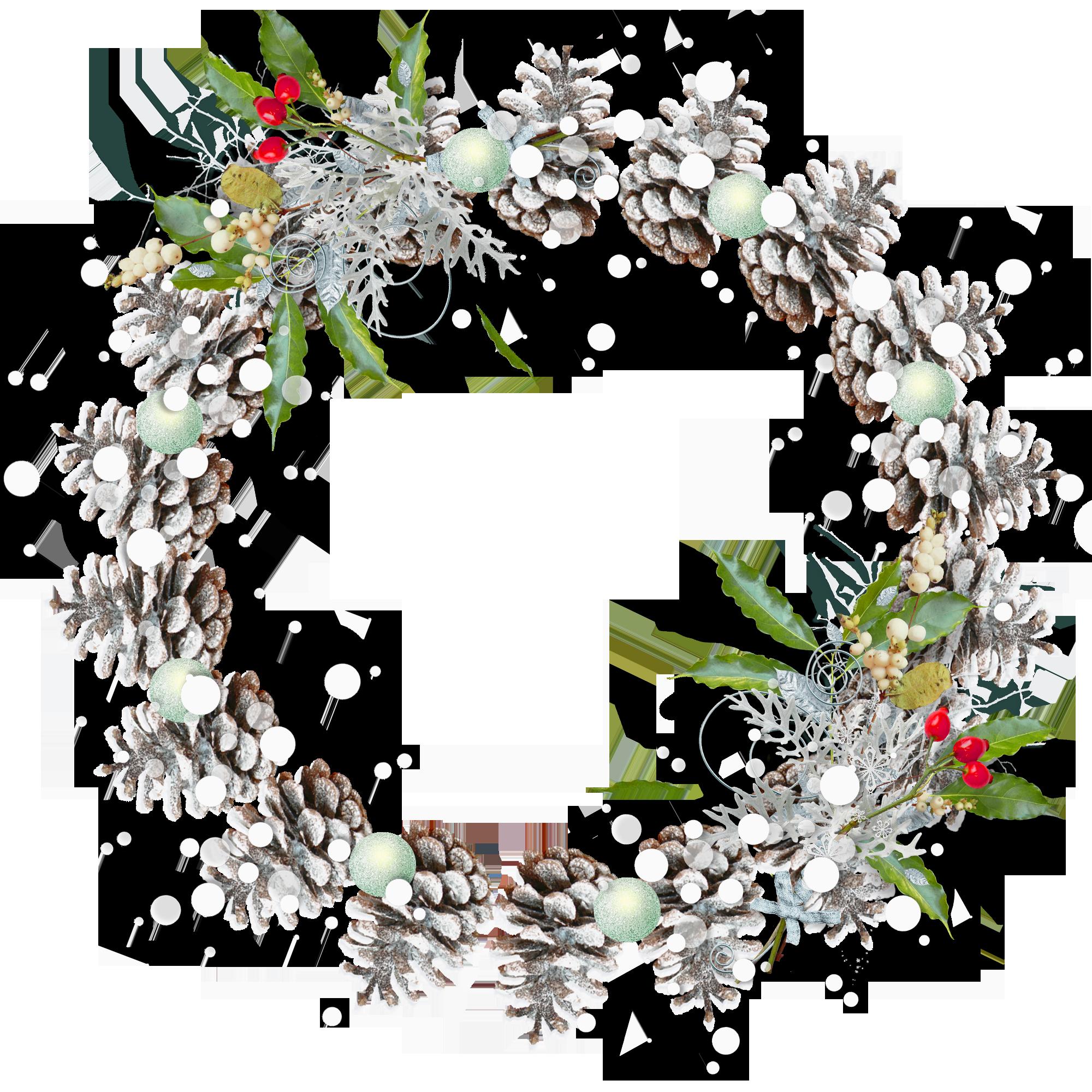 Pinecone clipart gymnosperm.  snowy for free