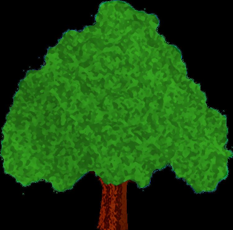 Pinecone clipart gymnosperm. Tree identification google slides