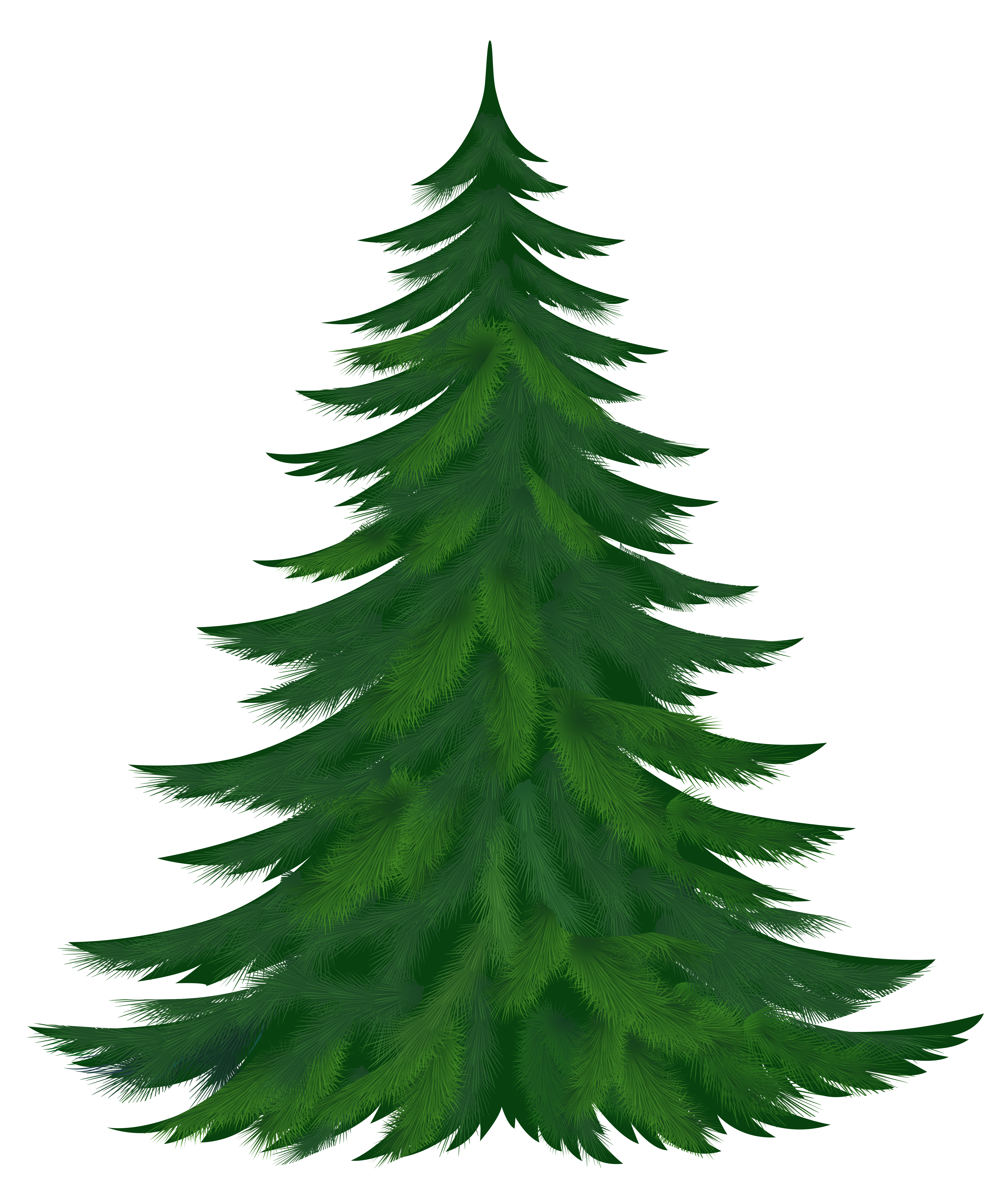 Woodland clipart fir tree.  collection of pine
