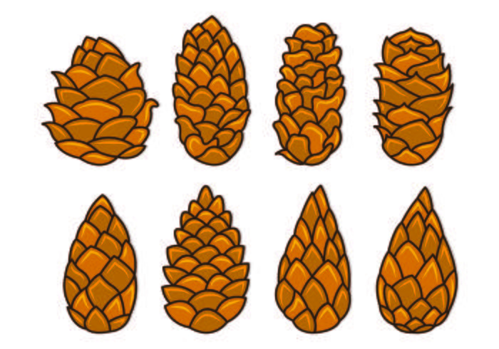 Free pine cone download. Pinecone clipart natural form