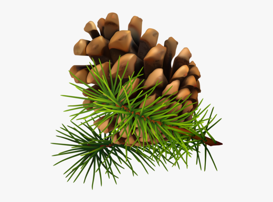 Needle clip art cone. Pinecone clipart pine sprig