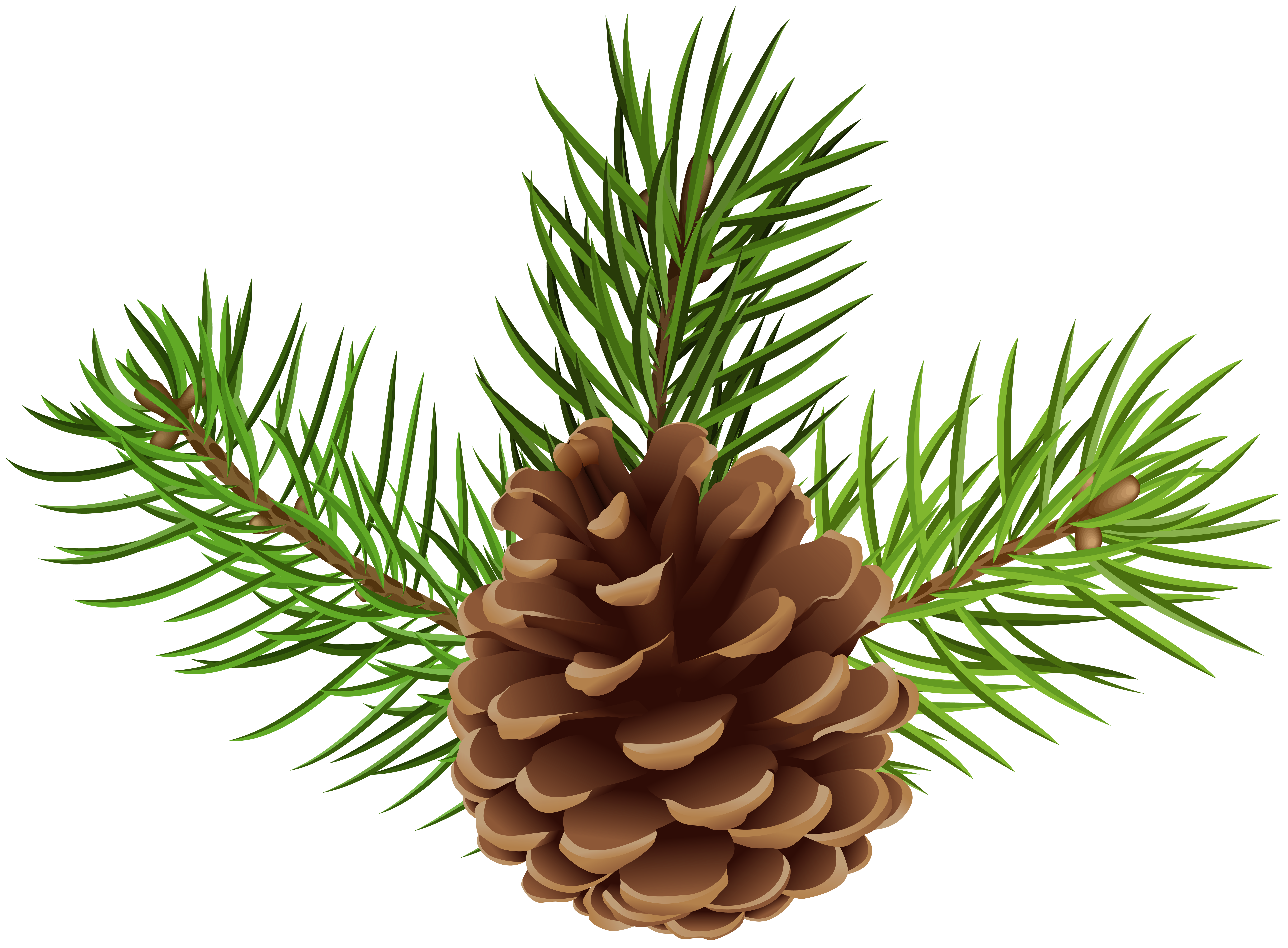 Pinecone clipart pine sprig. Cone png clip art