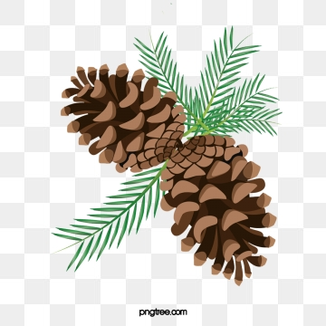 Pine cone png psd. Pinecone clipart vector