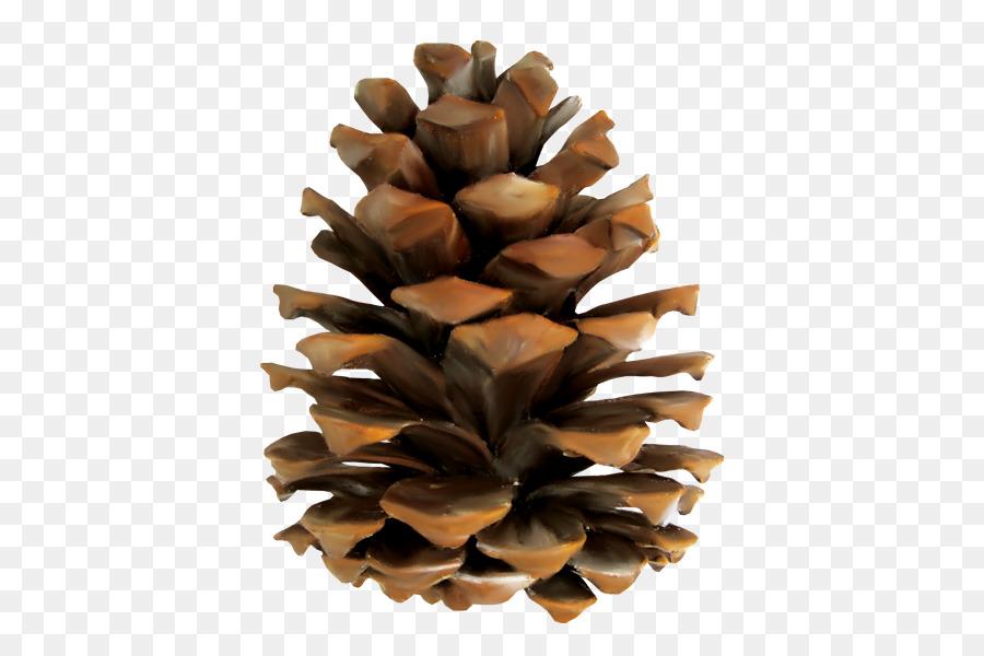 Pinecone clipart vector. Clip art pine portable