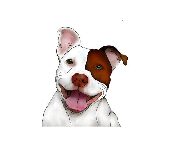 Happy smiling illustration man. Pitbull clipart