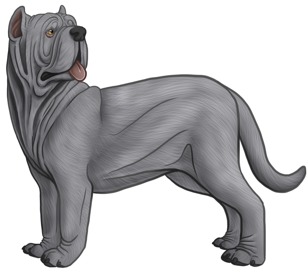 Pitbull clipart spotted dog. Neapolitan mastiff drawing google