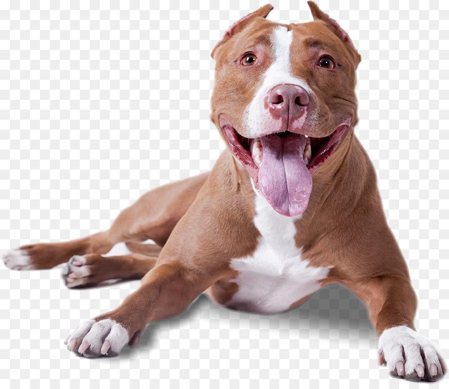 Pitbull clipart transparent. Dog cartoon clip art
