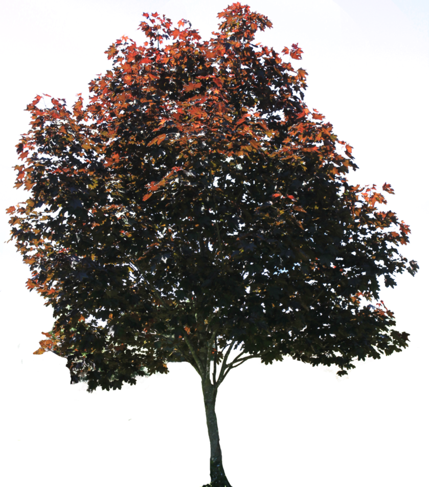 Planet clipart landscape. Tree png by thy