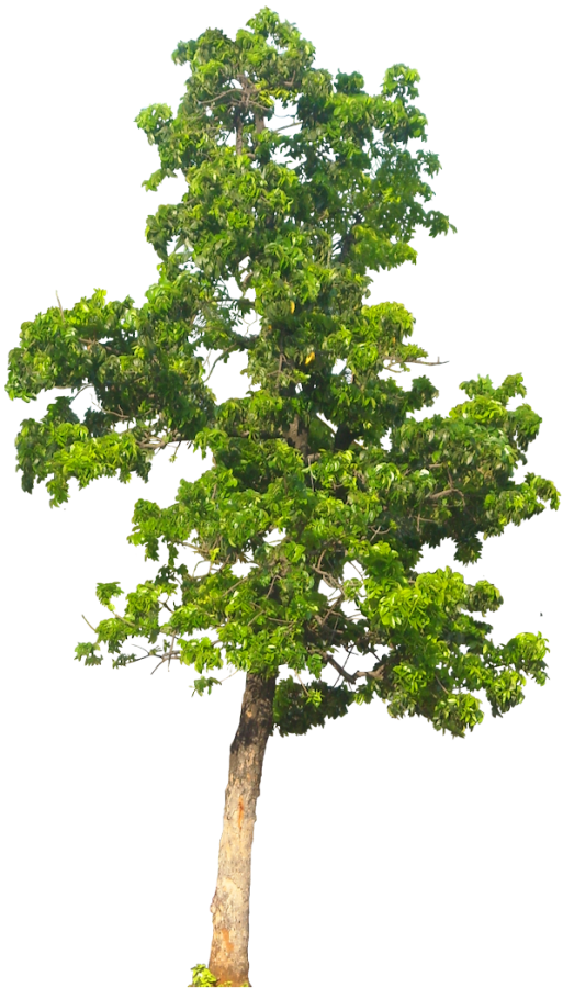 tree png images. Planning clipart landscape architect