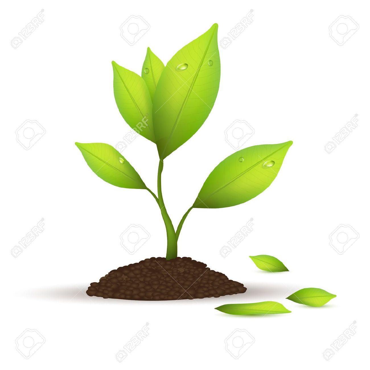 Plant clipart. Care