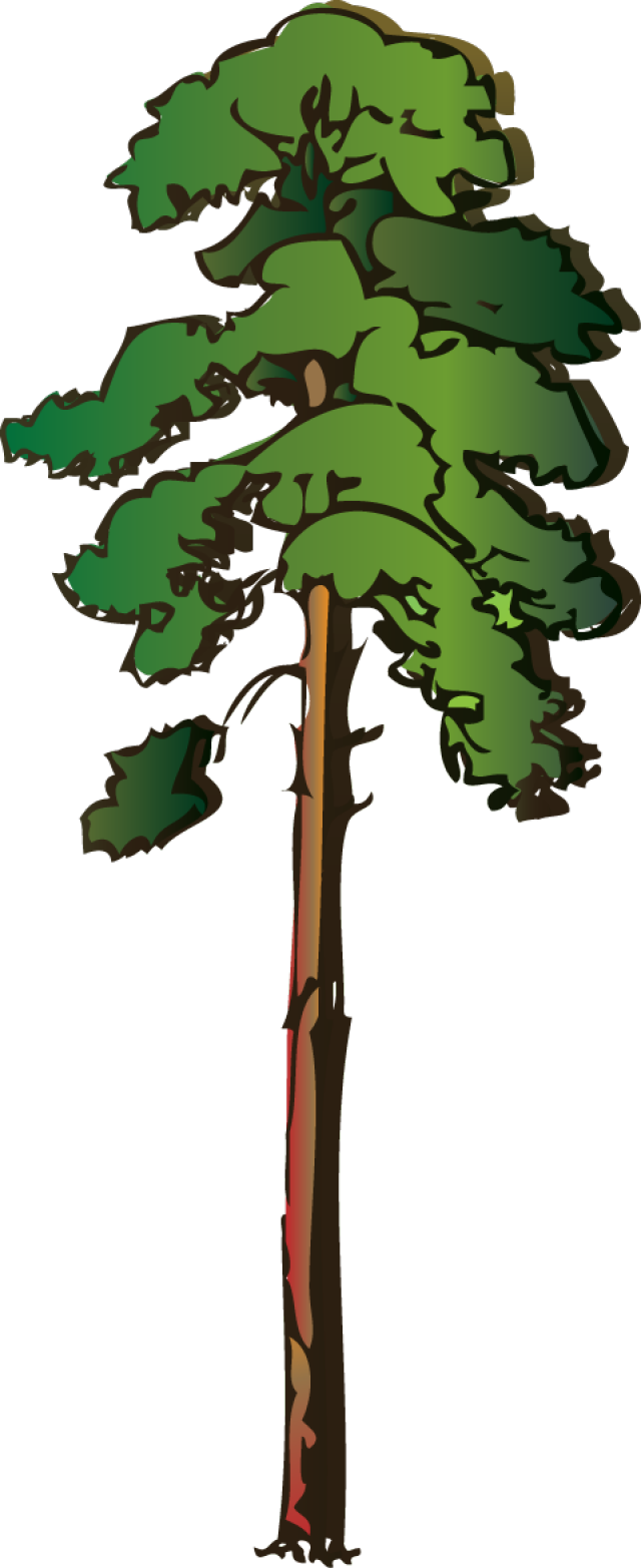 Tall clipart tall animal. Cartoon thin tree clipground
