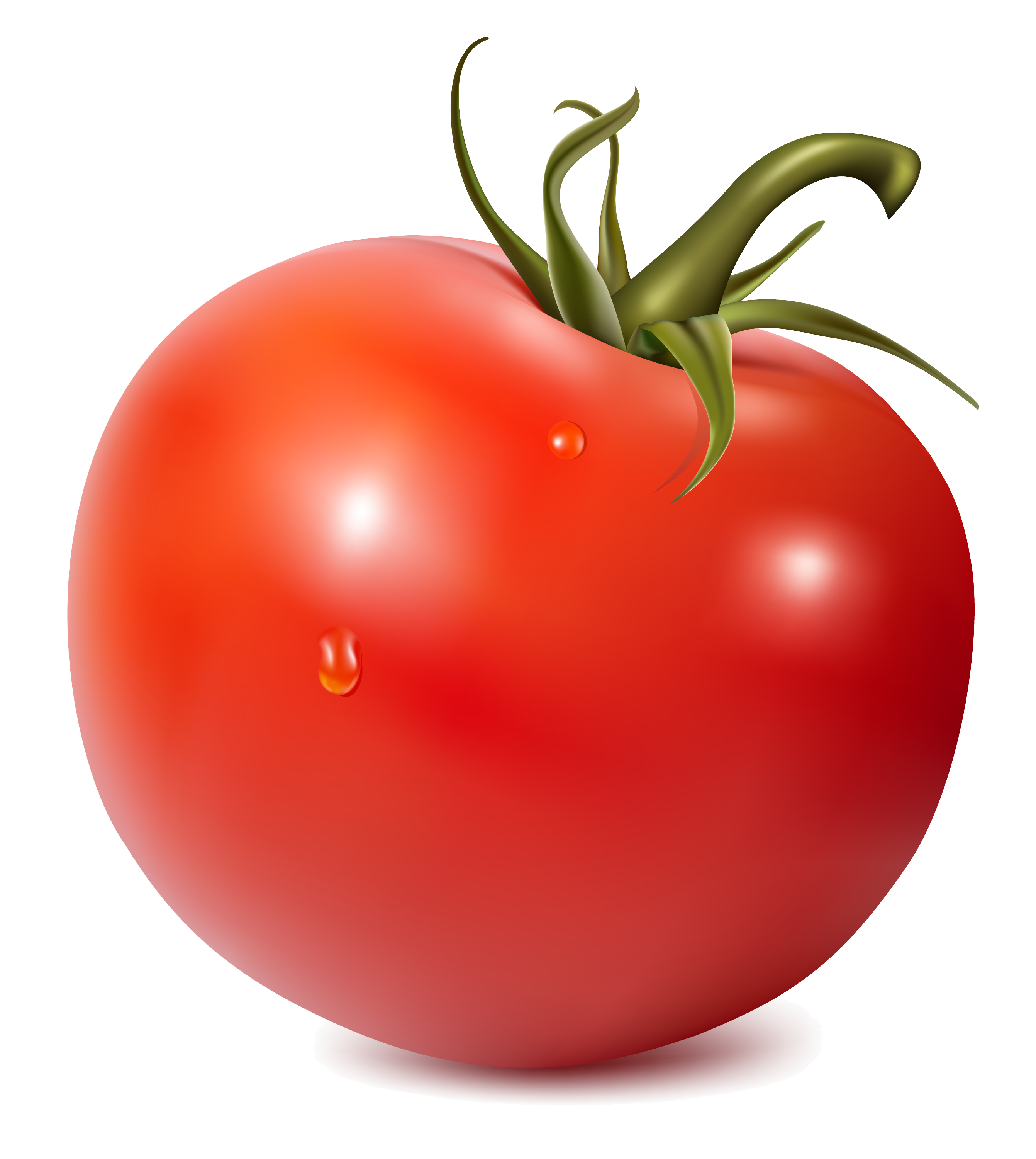 Tomato transparent background frames. Tomatoes clipart local