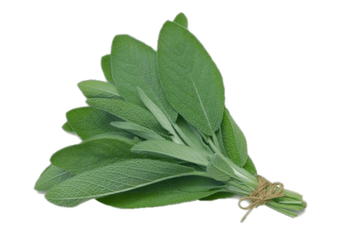 Plant clipart herb. Sage transparent png stickpng