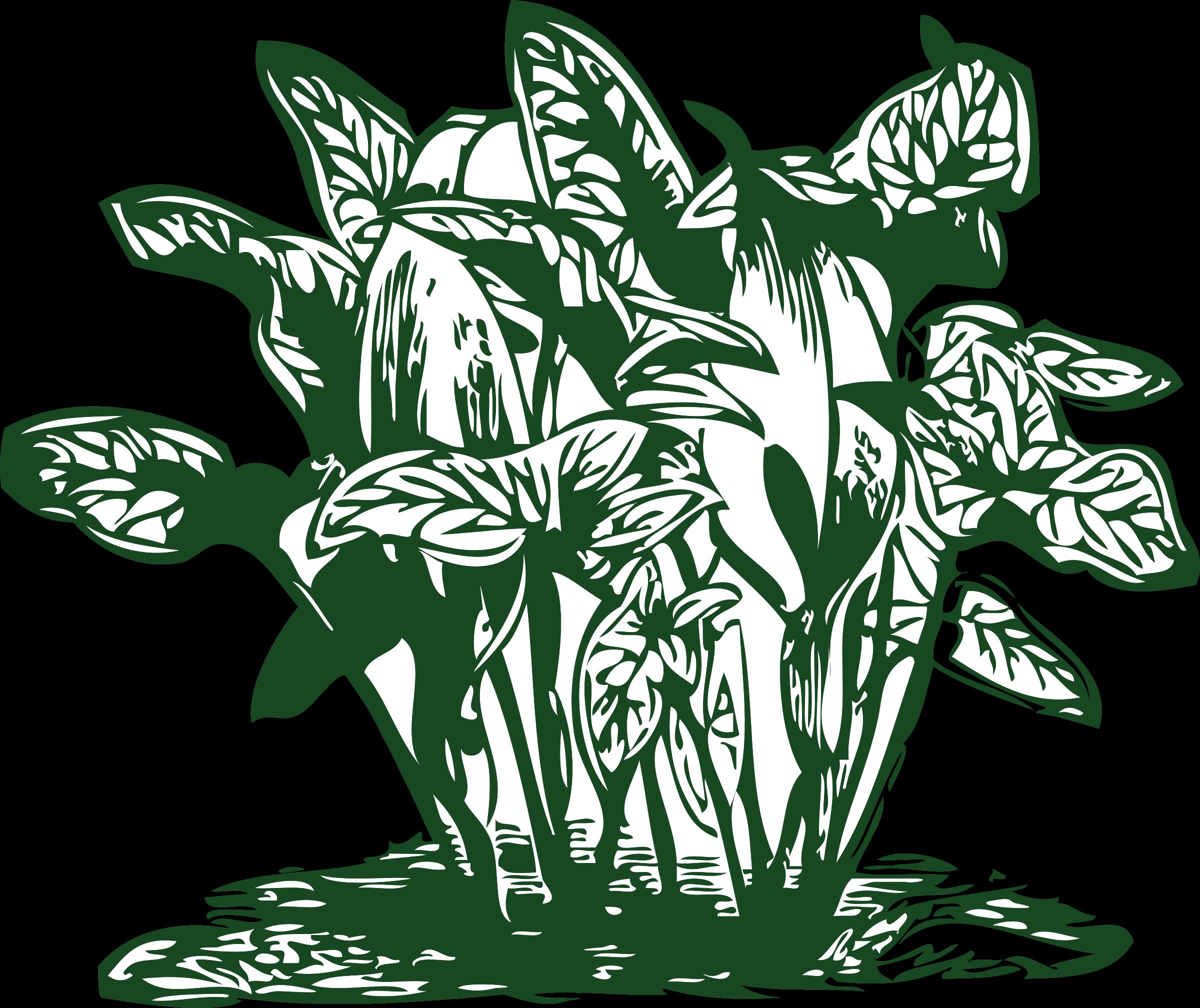 Plants clipart line art. Tropical big image png