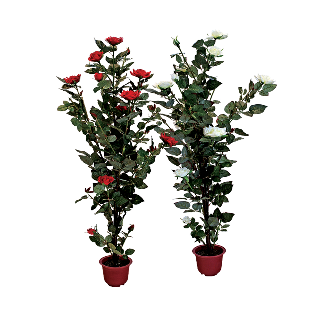 Plants clipart potted plant. Rose with pot png