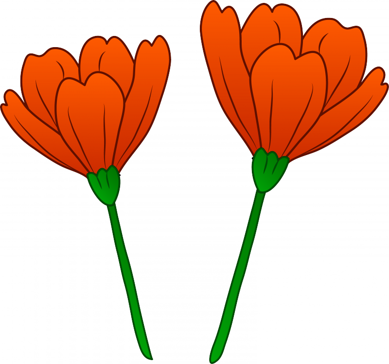 Flower clip art cliparts. Poppy clipart golden poppy