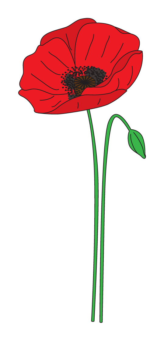 collection of anzac. Poppy clipart daisy