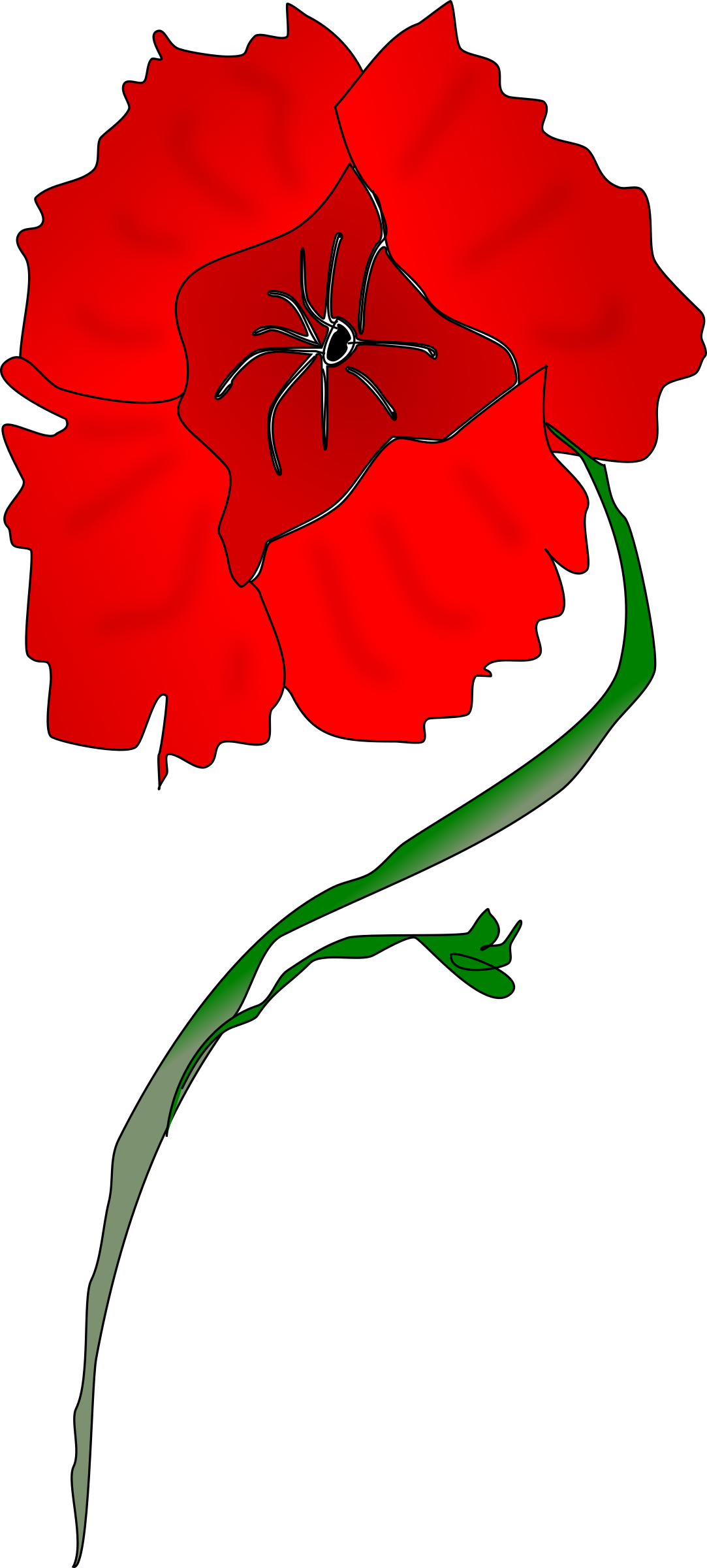 Poppy clipart red poppy. Freeform big image png